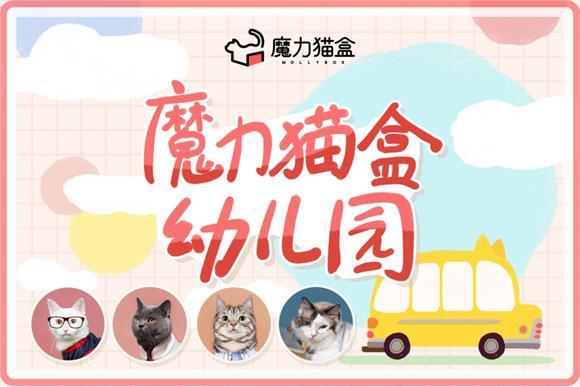 """魔力猫盒幼儿园教会照顾""""小情人"""",宠物行业"""